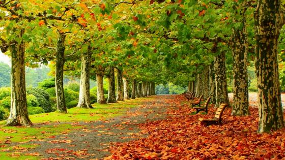 Beginning of autumn in the park wallpaper
