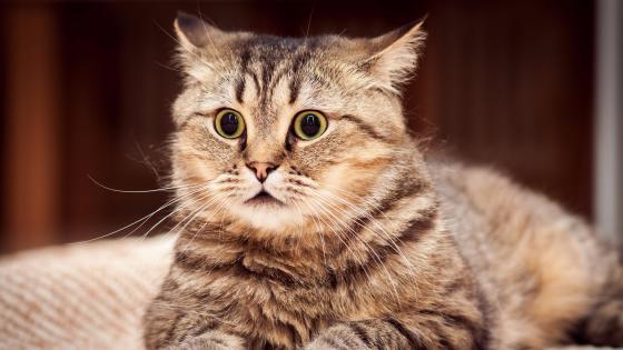 Cute cat face  wallpaper