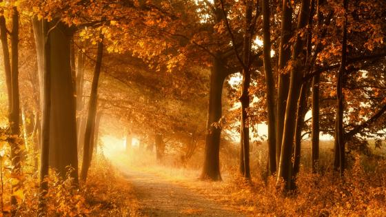 Autumn sunray wallpaper