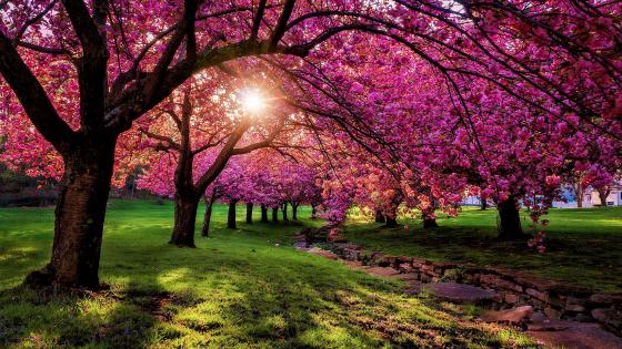 Pinky spring scenery wallpaper