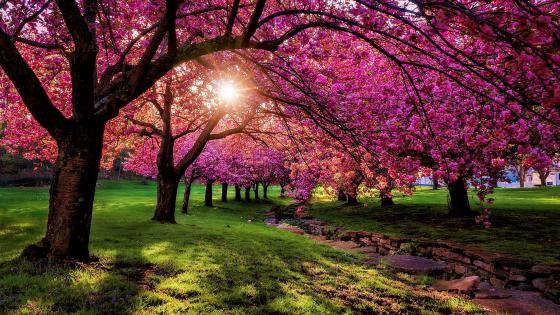 Pinky spring scenery wallpaper