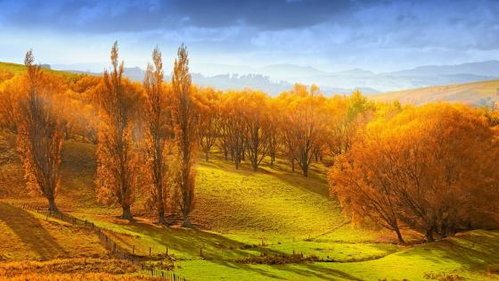 Burnt orange beauty of autumn - Arrowtown, New Zealand wallpaper