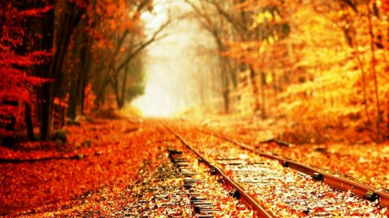 Autumn train trails in the forest wallpaper