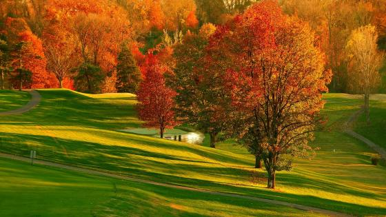 Beatutiful autumn park in Richmond wallpaper