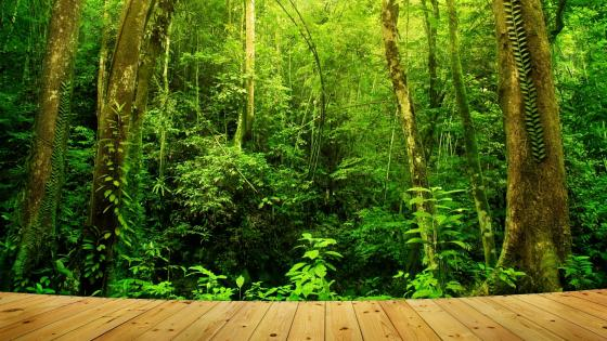 Tropical rainforest - Borneo, Malaysia wallpaper