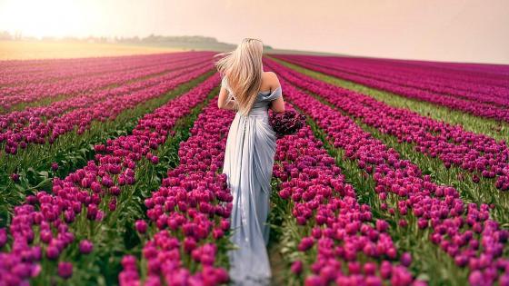 Woman walking in a tulip field wallpaper