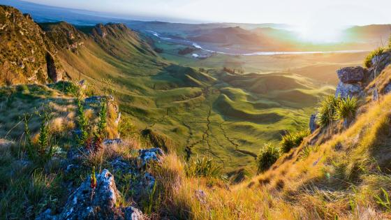 Grassy hills in the sunlight wallpaper