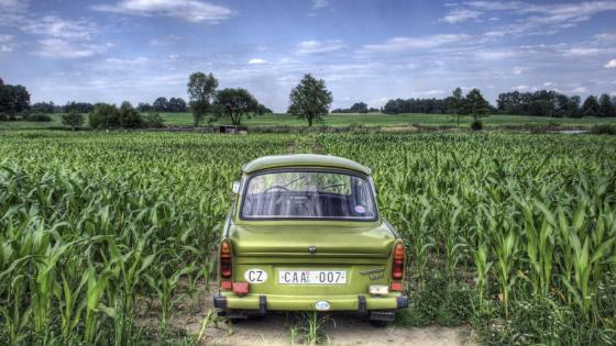 Trabant in the cornfield wallpaper