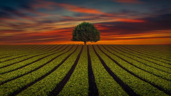 Lone tree on the horizon wallpaper