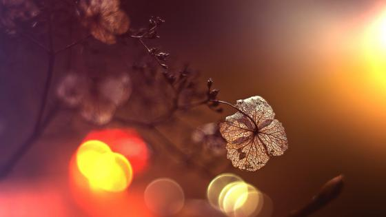 Dried plant with bokeh lights - Macro photography wallpaper