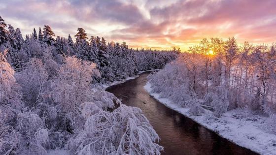 Frosty riverside forest wallpaper