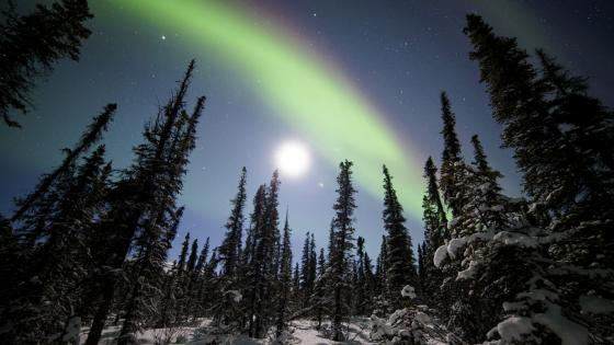 Aurora Borealis above Denali National Park - Alaska wallpaper