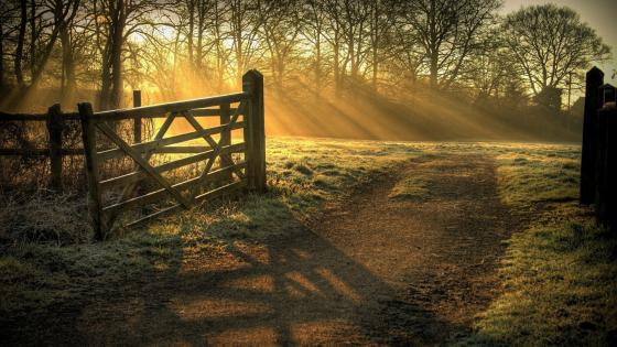 Rays of sun dancing on the farm fence  wallpaper
