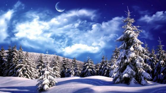 Snowy pines in winter night ❄️⭐️ wallpaper