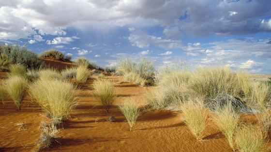 Kgalagadi Transfrontier Park - South African National Park wallpaper