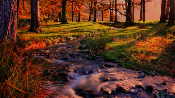 Beautiful autumn colors in the forest wallpaper