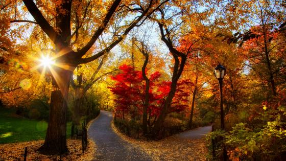 Autumn sunshine in the park    wallpaper