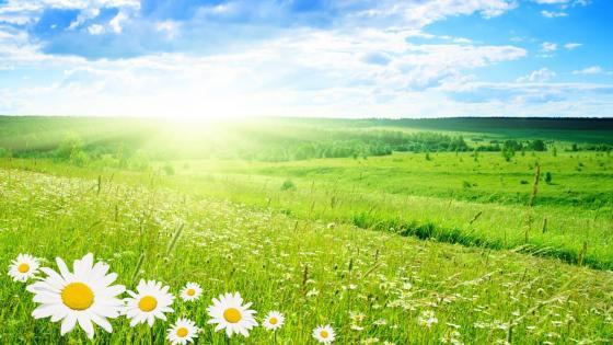 Morning sunshine above the flower field☀️ wallpaper