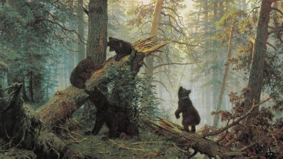 Morning in a pine forest  - Ivan Ivanovich Shishkin wallpaper