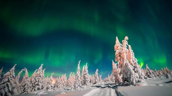 Green northern lights wallpaper