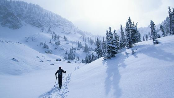 Cross-country skiing wallpaper