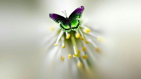 Colorful butterfly image wallpaper
