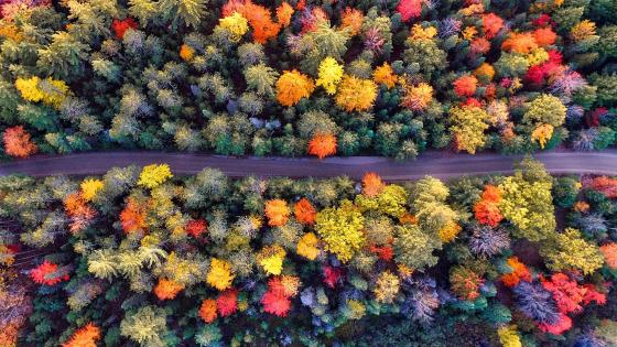 Top view of the autumn wallpaper