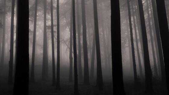 Foggy mystic forest wallpaper