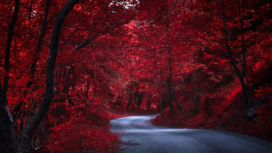 Road in the red forest wallpaper