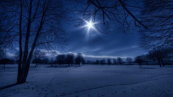 Winter landscape in moonlight wallpaper