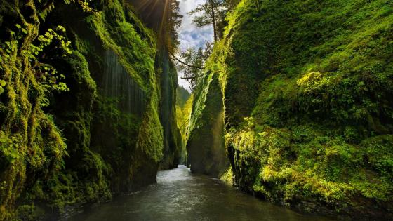 River between steep cliffs in Columbia River Gorge National Scenic Area, Oregon wallpaper