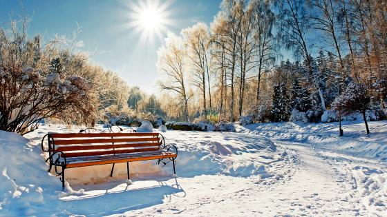 Winter park in the sunshine wallpaper