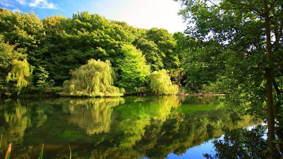Beautiful nature reflection wallpaper