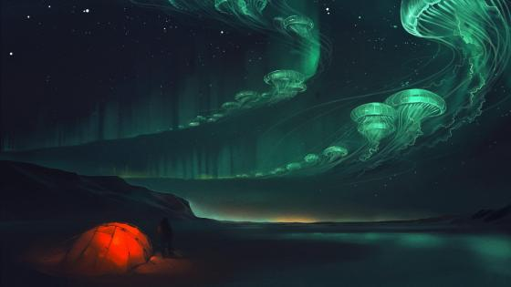 Jellyfish northern lights - Fantasy art wallpaper