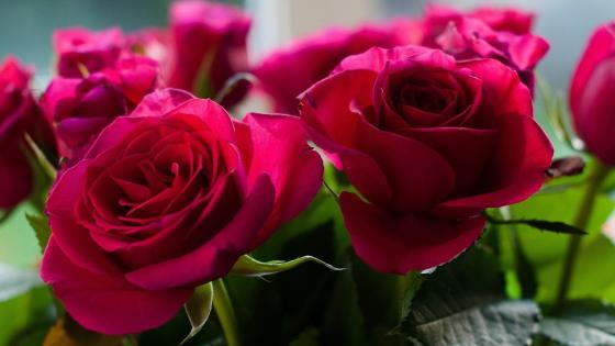Picture of bouquet of roses from garden wallpaper