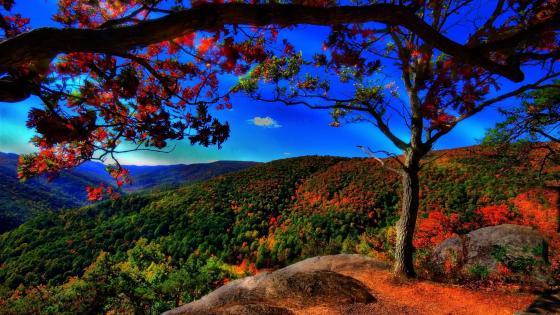 Beautiful autumn landscape wallpaper