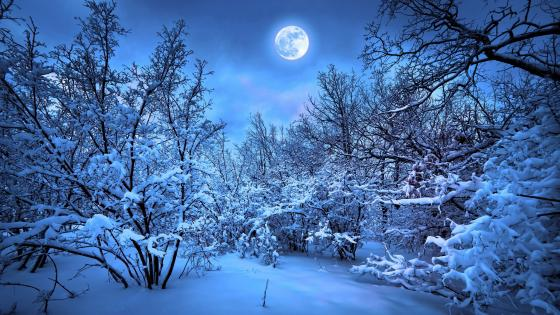 Snowy winter forest in the moonlight wallpaper
