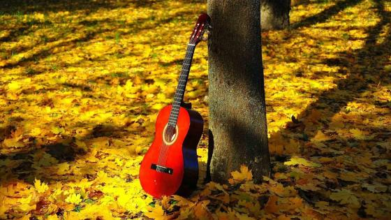 Guitar in autumn forest wallpaper