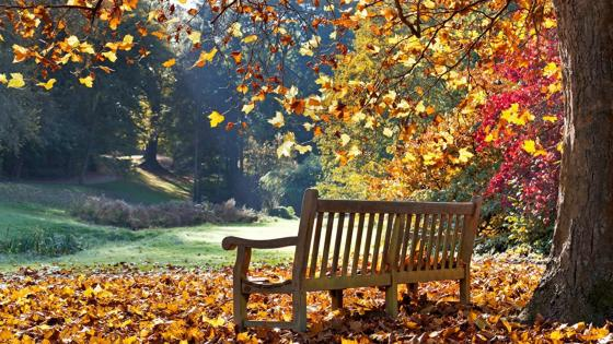 Bench in the autumn park wallpaper