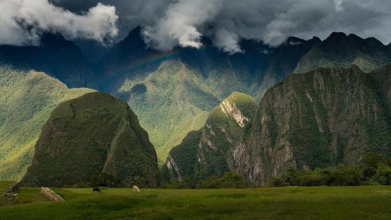 Machu Picchu - Peru wallpaper
