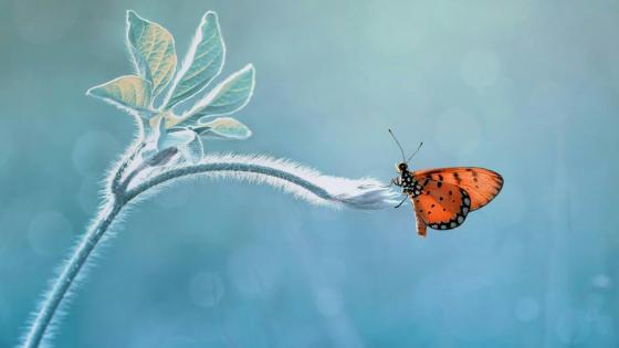 Beautiful butterfly - Macro photography wallpaper