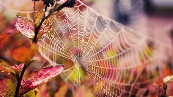 Beautiful spider net wallpaper