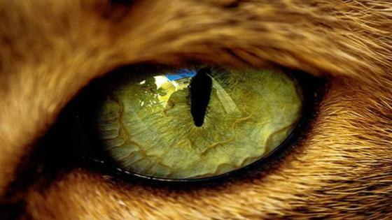 Beautiful eye of a cat wallpaper