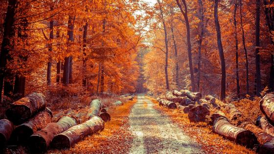Road In The Wild Autumn Forest wallpaper