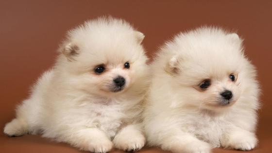 Cute baby dogs wallpaper
