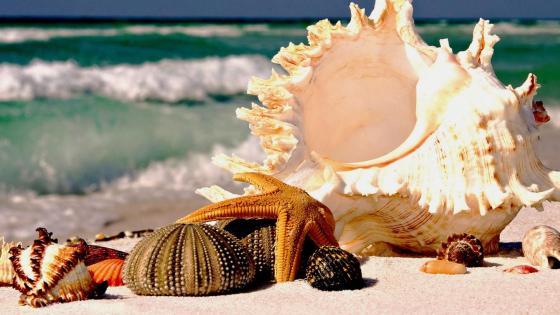 Seashells on the shore  wallpaper