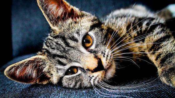 Beautiful cat - Close up photography wallpaper
