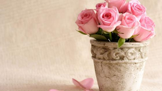 Pink rose bouquet  wallpaper