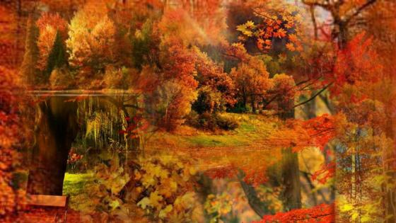 Autumn colors collage wallpaper