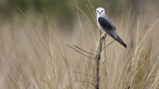 Beautiful bird on a twig wallpaper